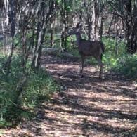 StageNC_deer