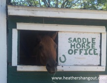MackIs_horse_blog