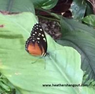 butterfly_zoo